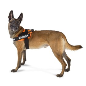 ARNES JULIUS -K9 IDC POWER NARANJA TALLA 3 Julius-K9 16IDC-FOR-3